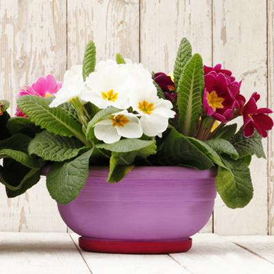 Flowers Unique